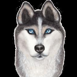 Arevkasunshine avatar