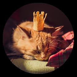 Lokfrid avatar