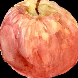 Roselocket avatar