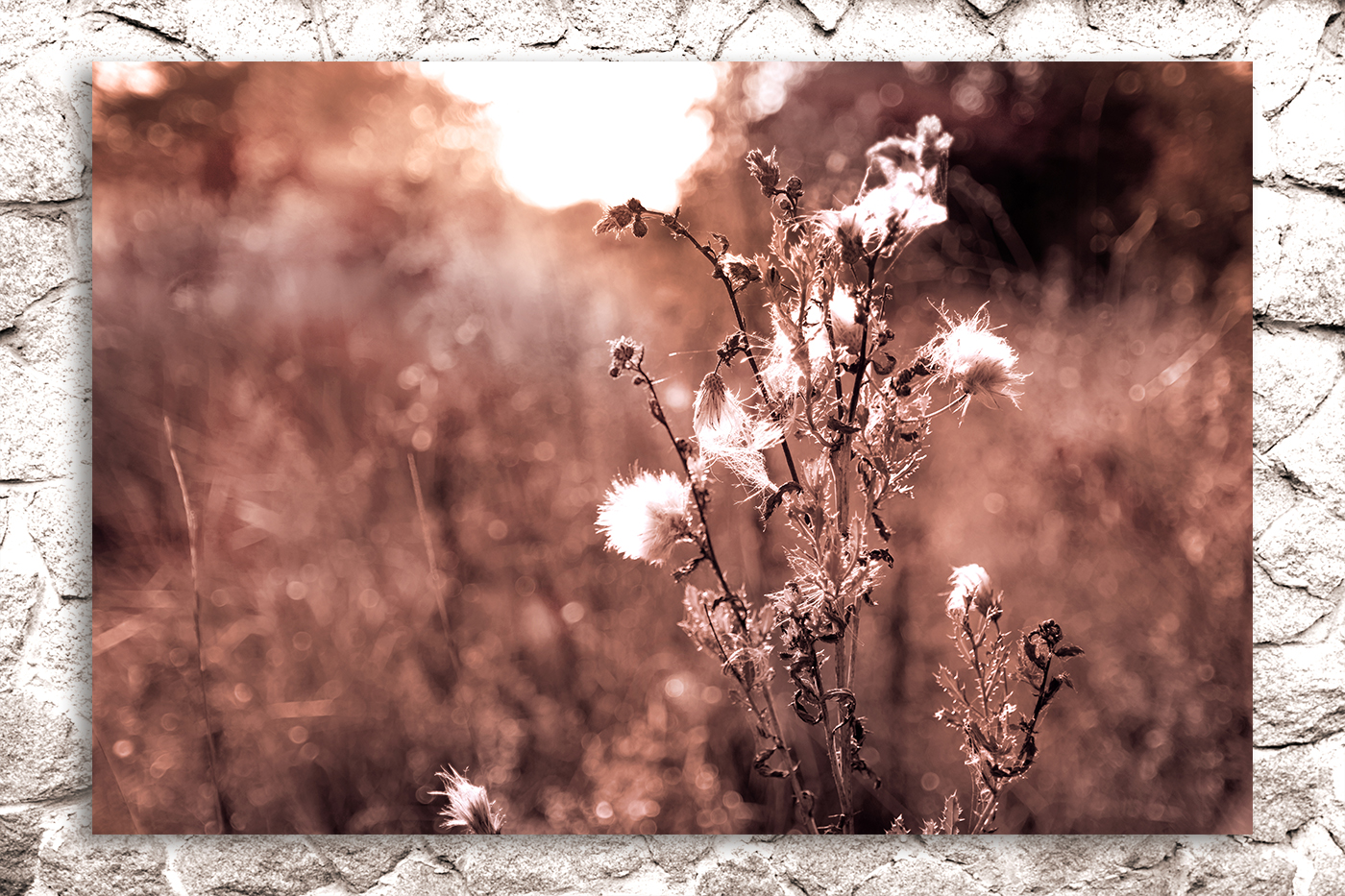 Nature photo, landscape photo, floral photo, flora photo example image 3
