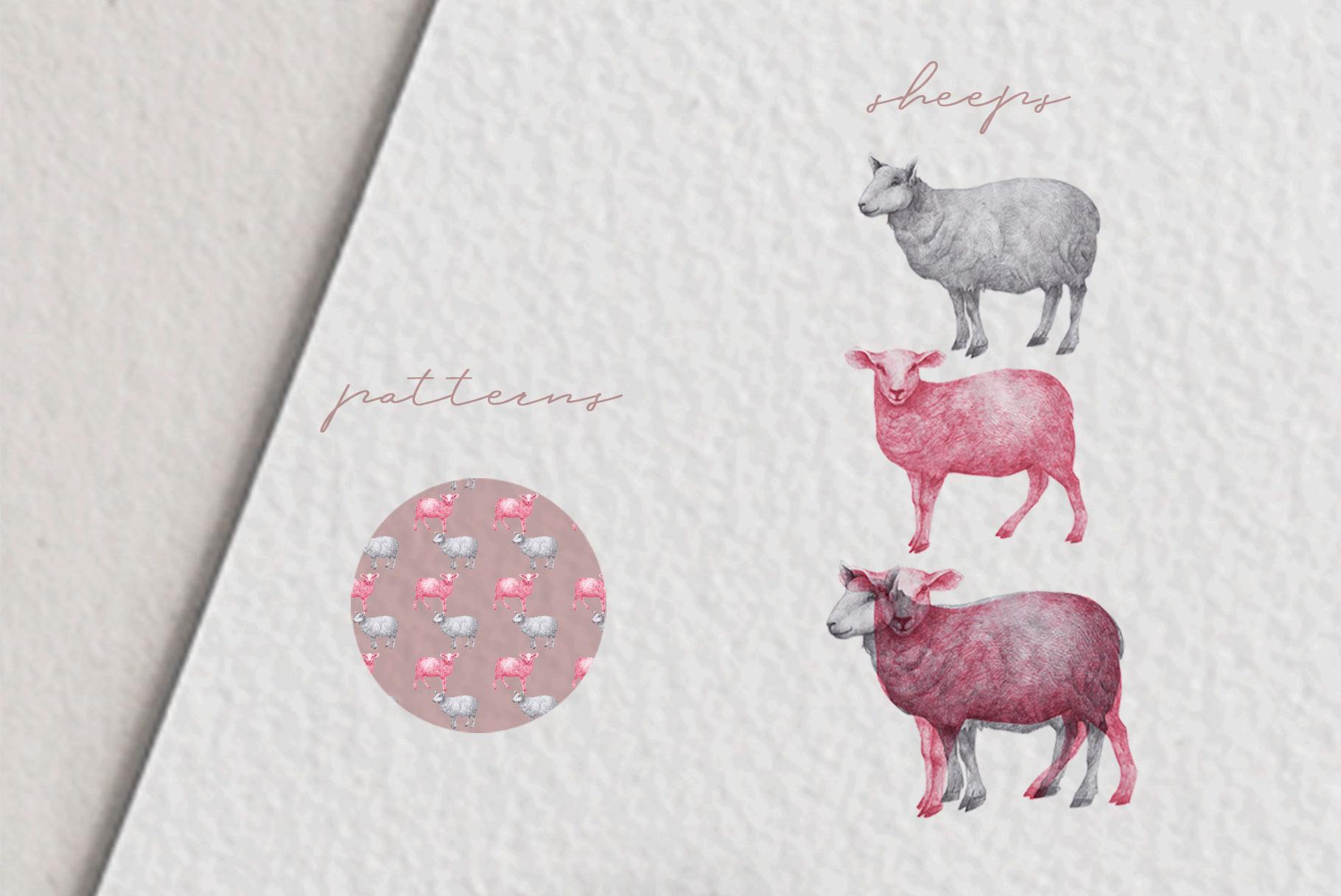 Hand drawn Sheep example image 3