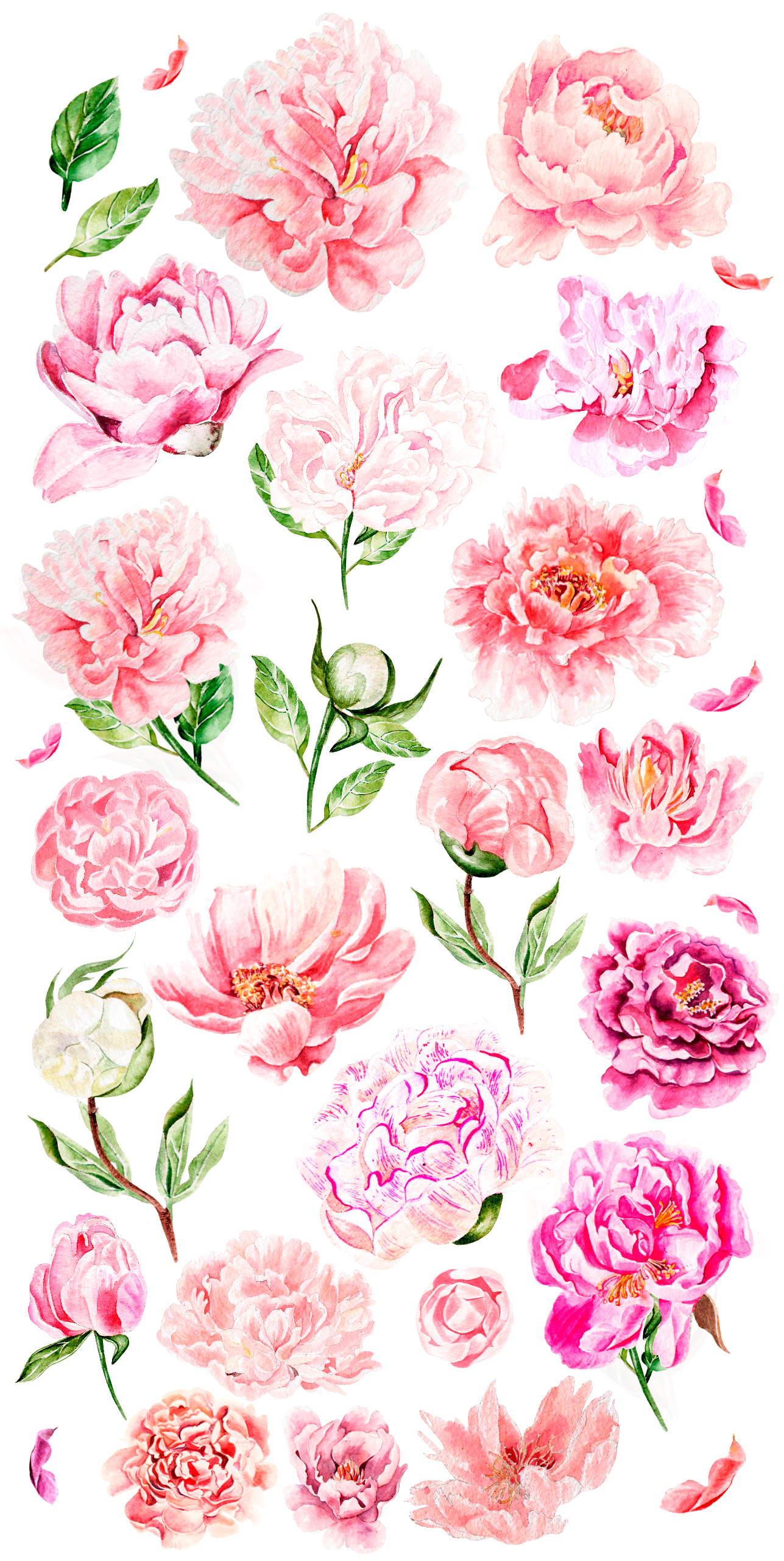 Hand Drawn watercolor Peony example image 3