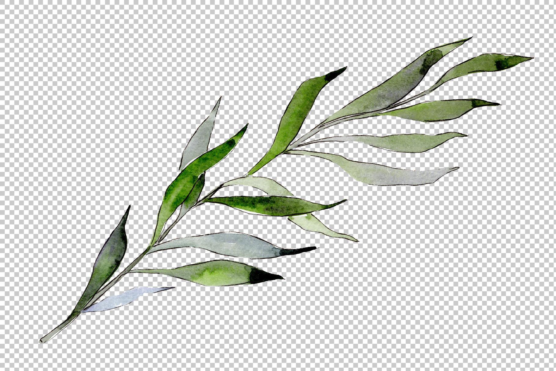 Willow branches PNG watercolor set example image 5