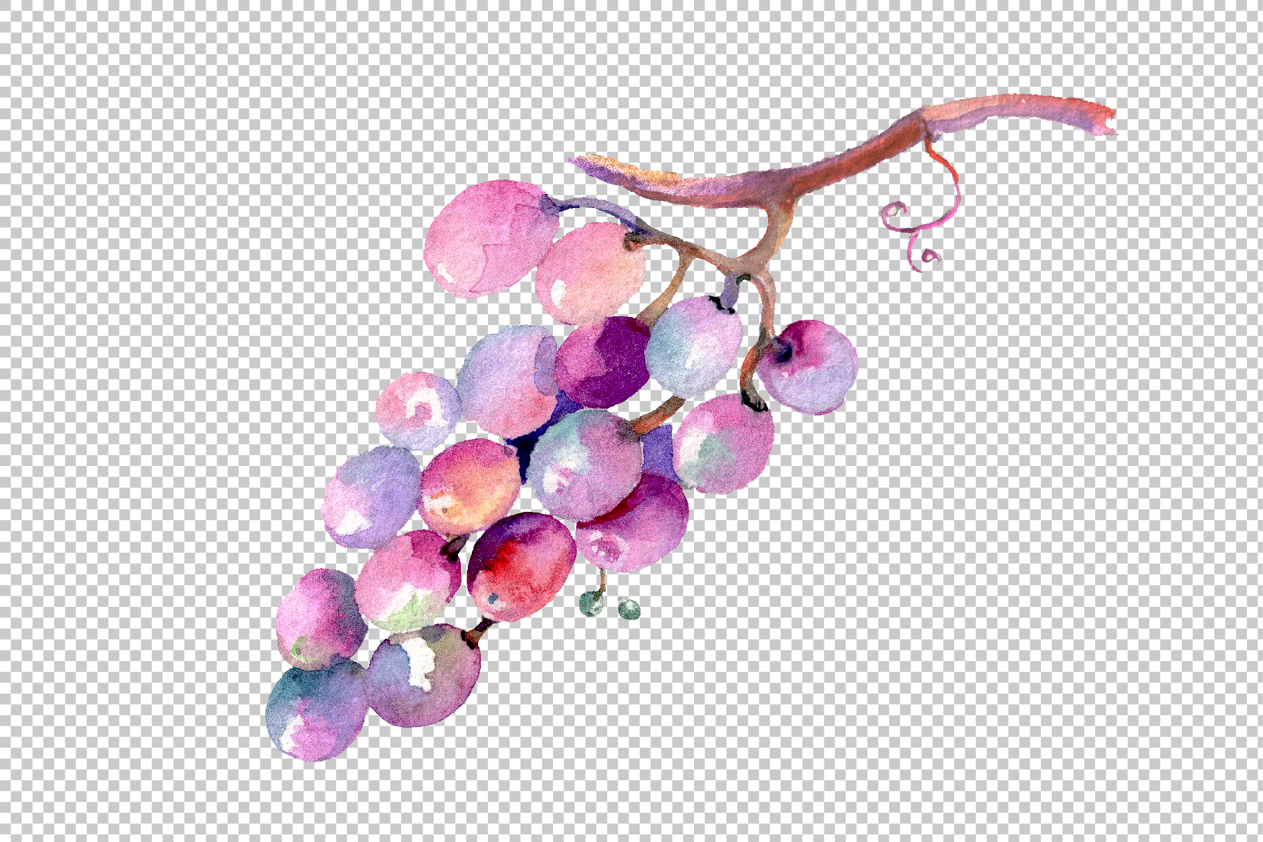 Blue grapes Watercolor png example image 9