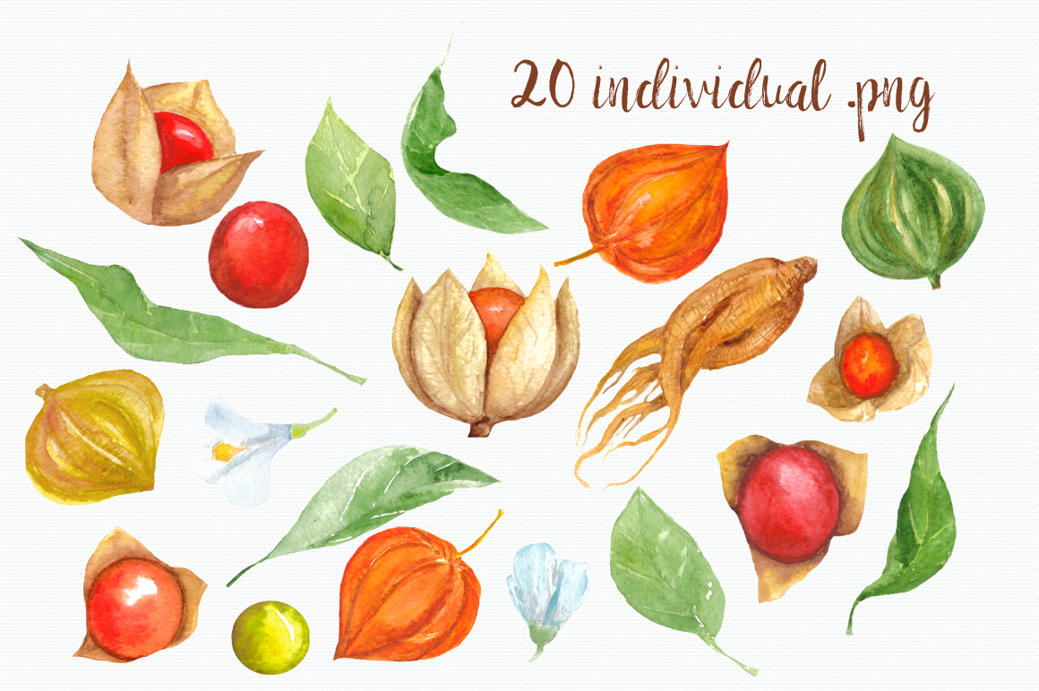 Watercolor Physalis Clip Art example image 2
