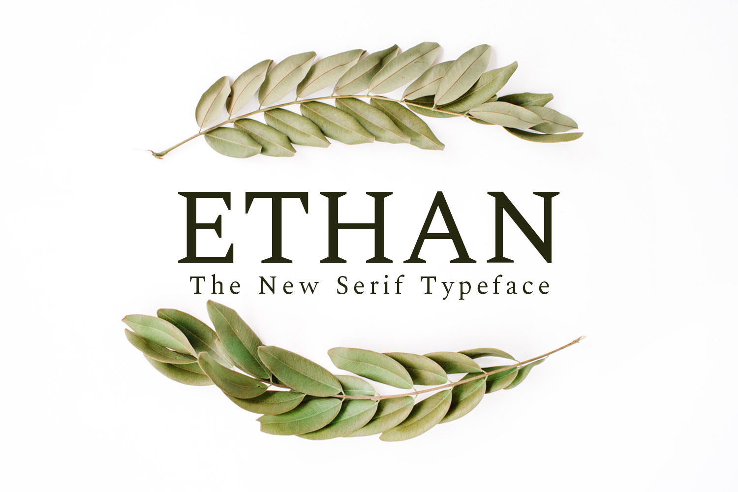Ethan Serif 8 Font Family Pack example image 1