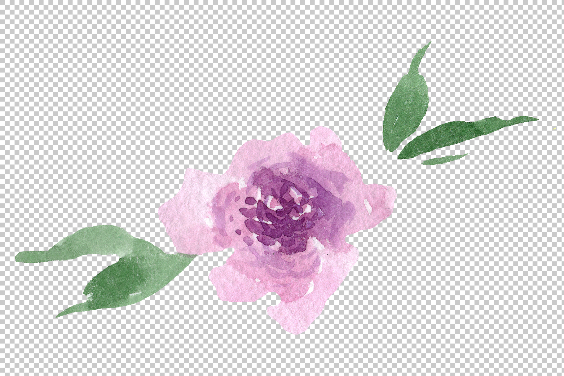 Delicate colorful peony PNG watercolor set example image 9