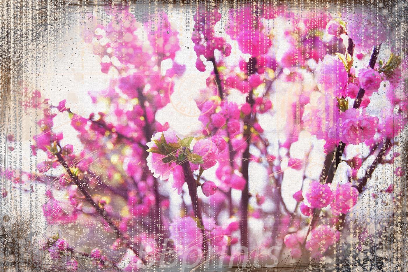 Nature photo, floral photo, spring photo example image 1