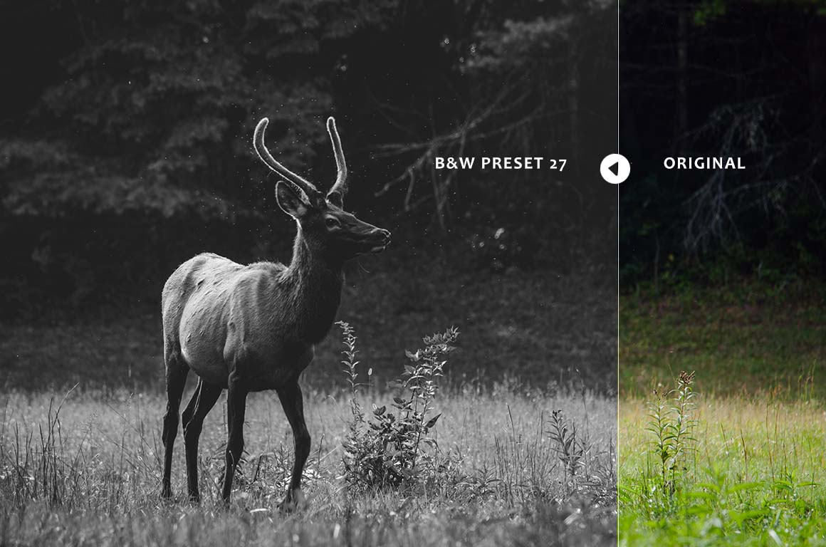 Black & White Collection Lightroom Presets example image 8