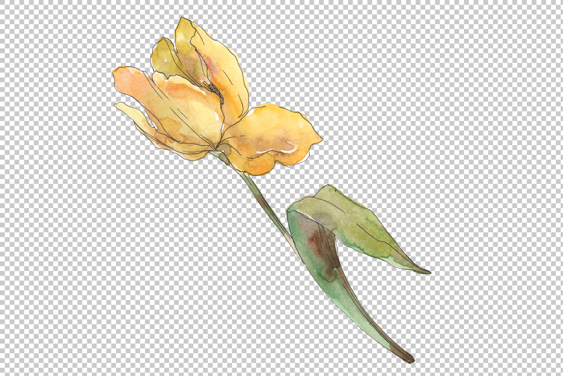 Assorted tulip bouquet Watercolor png example image 2