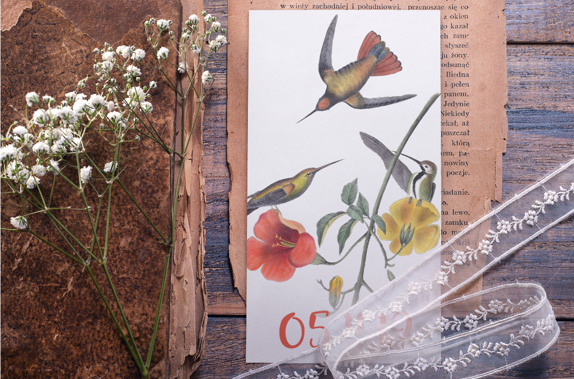 Hummingbird Bundle - Volume One - 20 Count example image 6