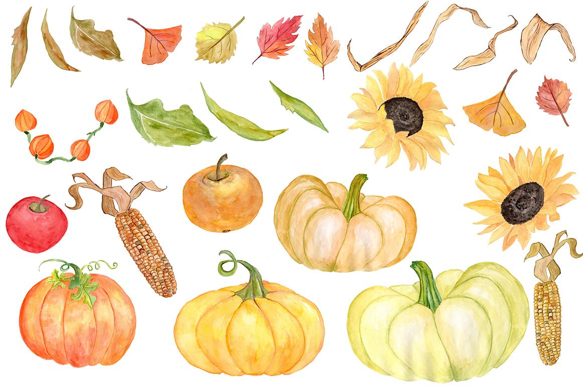 Pumpkin watercolor. Clipart