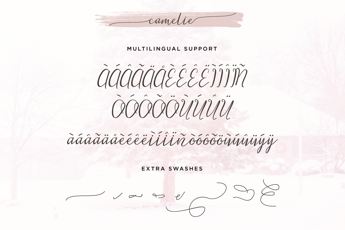 Camelie Typeface example image 6