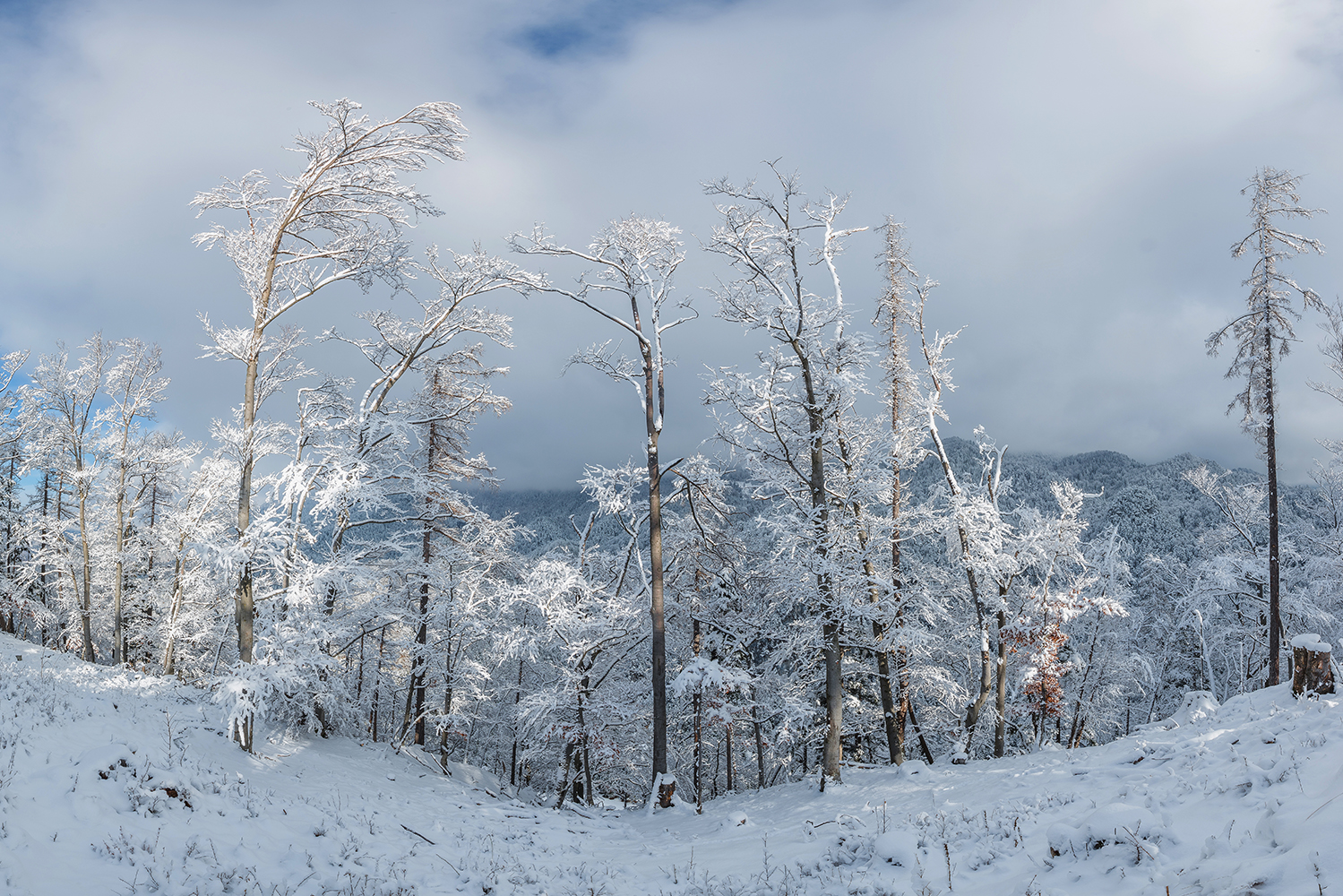 In the winter forest on a snowy day example image 1