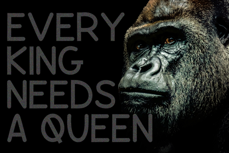 Gorilla  example image 2