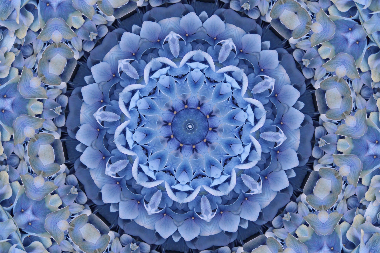BEAUTIFUL HYDRANGEAS example image 1