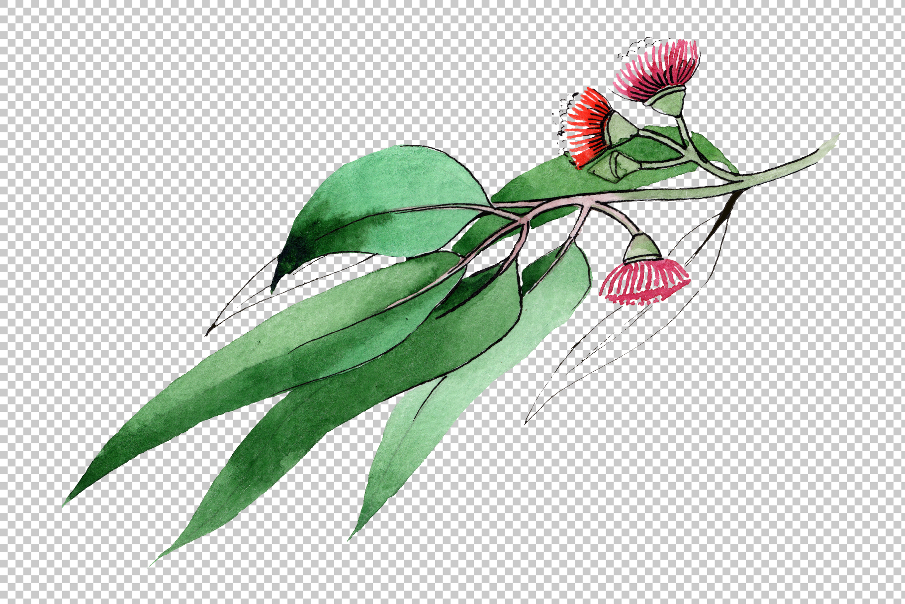 Eucalyptus branch PNG watercolor set example image 3