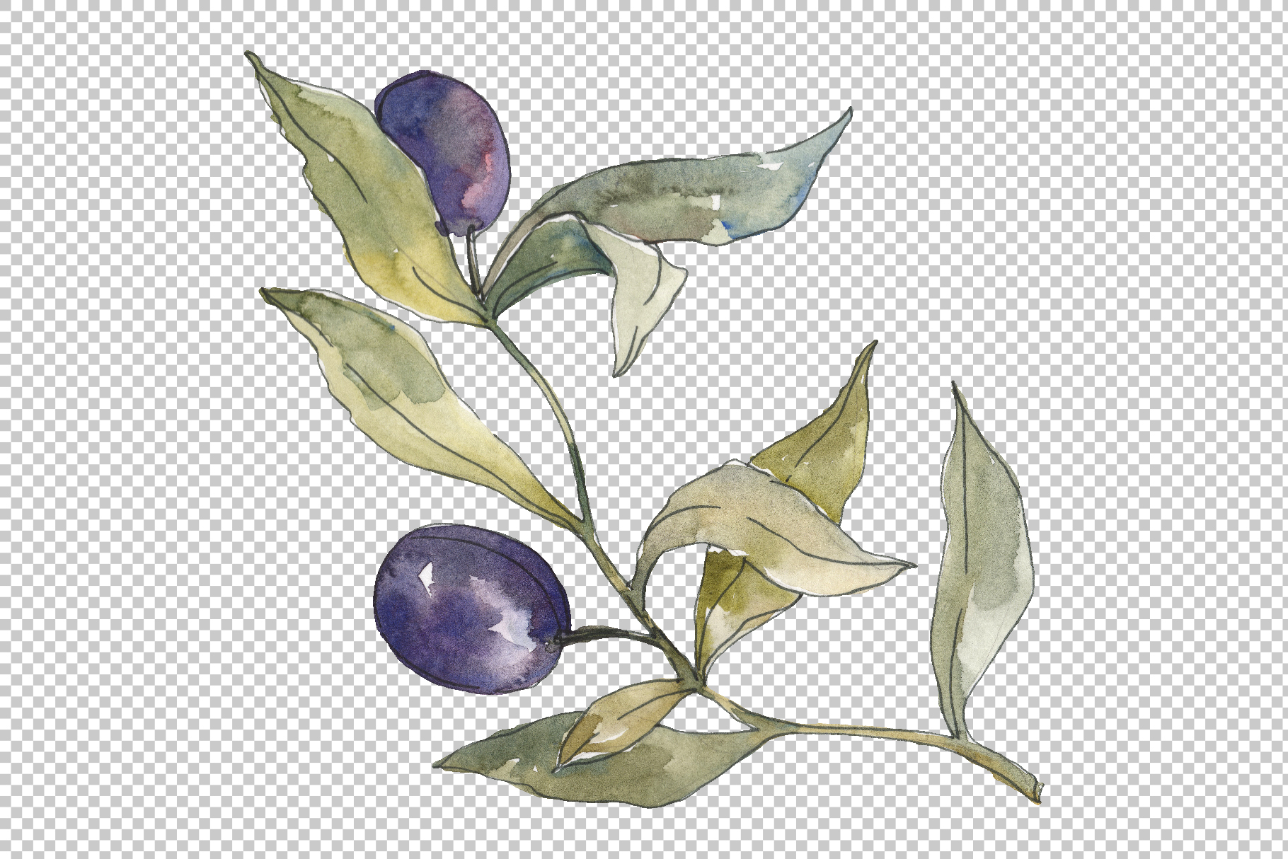 Olives Watercolor png example image 2