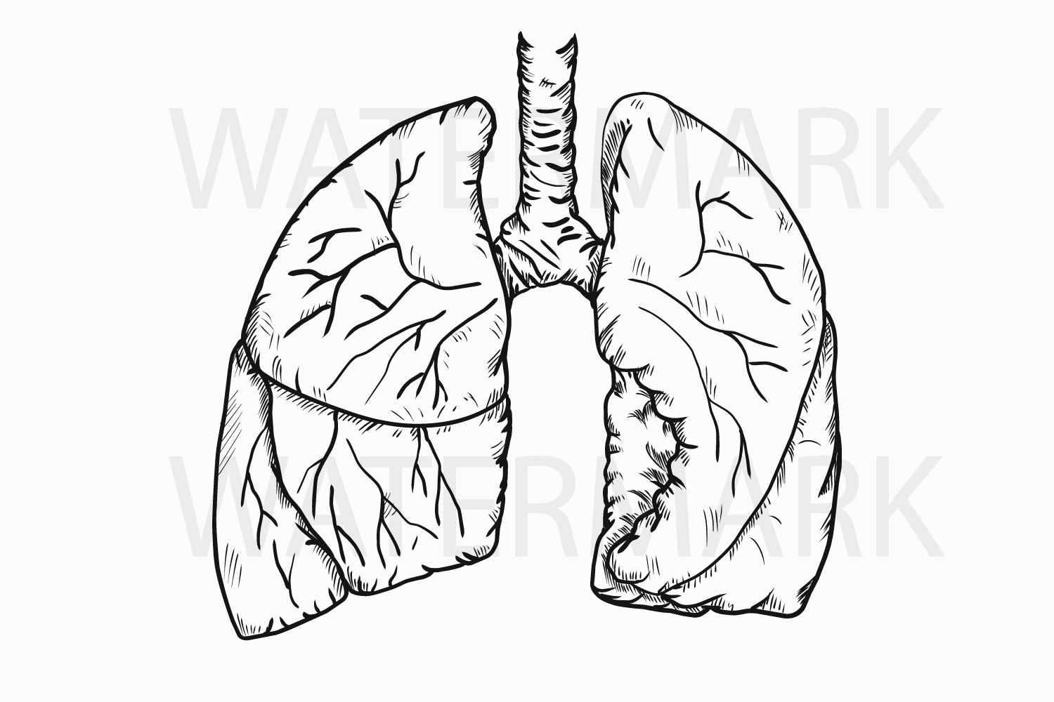 It is a graphic of Légend Human Lungs Drawing