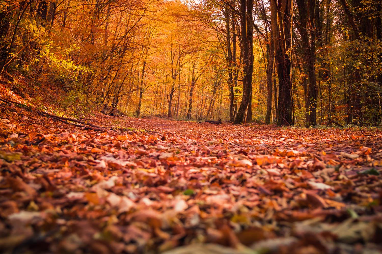 1 autumn photos, styled stock photos example image 1