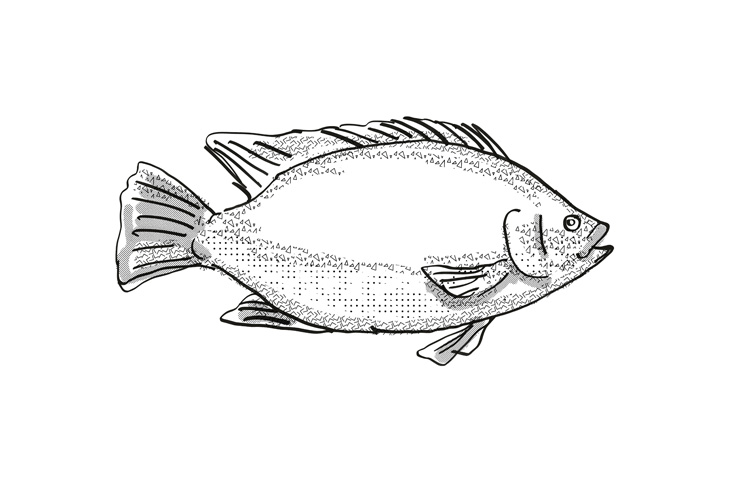 Tilapia Fish Cartoon Retro Drawing example image 1