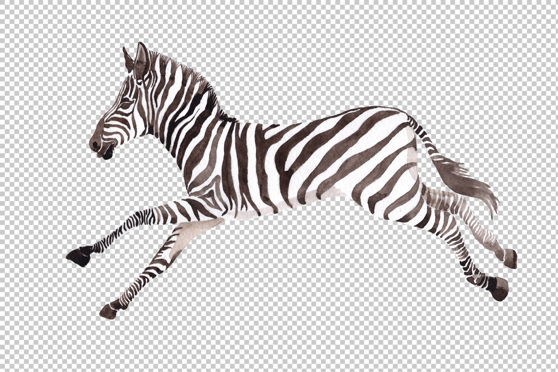 Zebra set Watercolor png example image 4