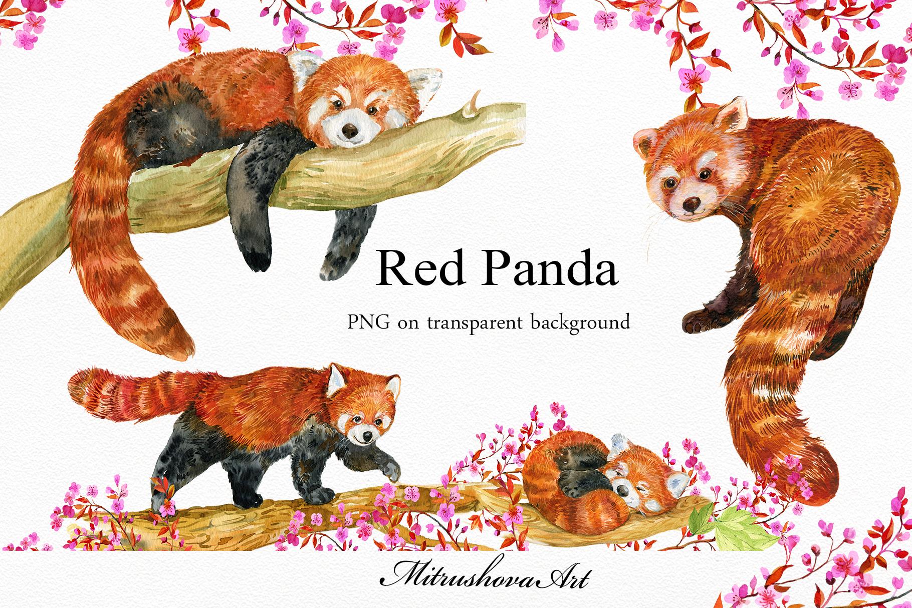 Red Panda ,watercolor illustrations example image 3