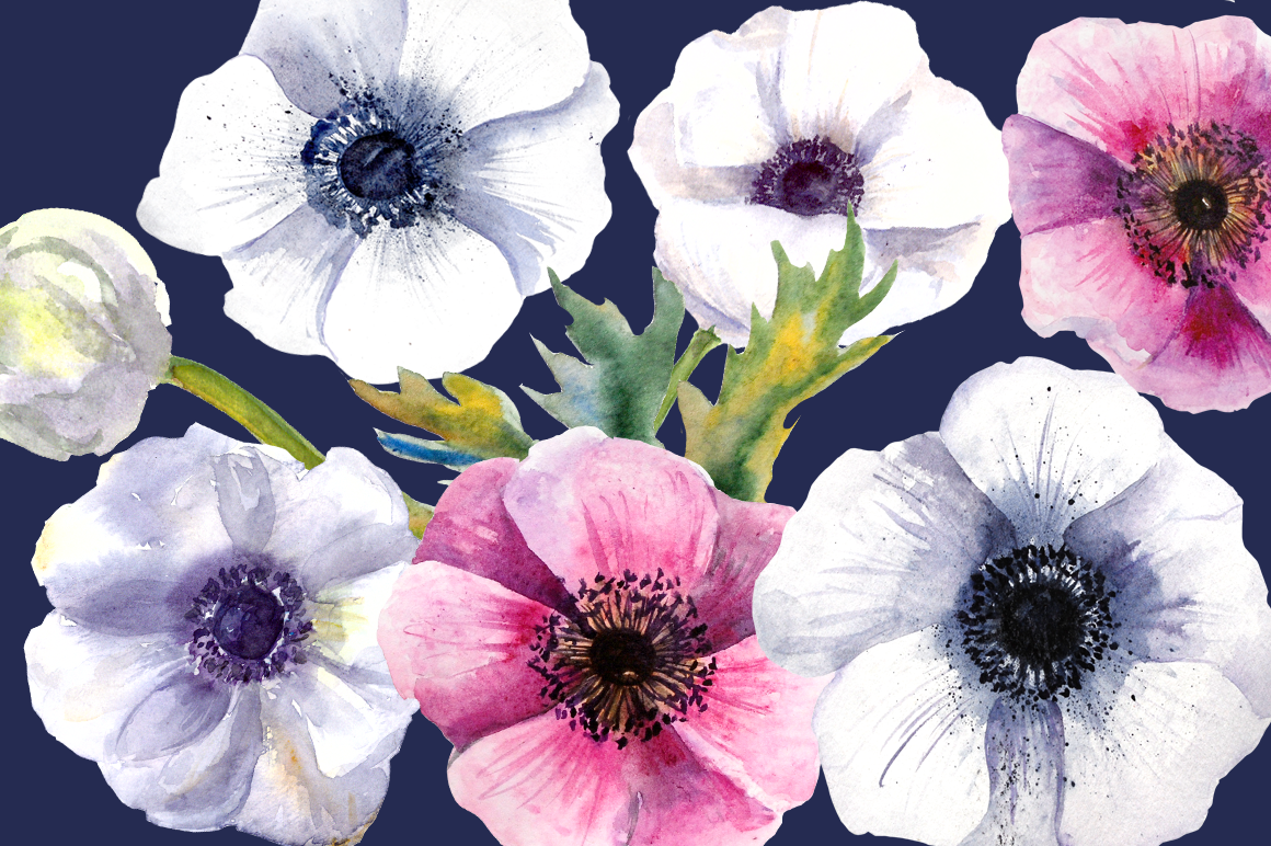 Watercolor Anemone Clipart Set example image 3