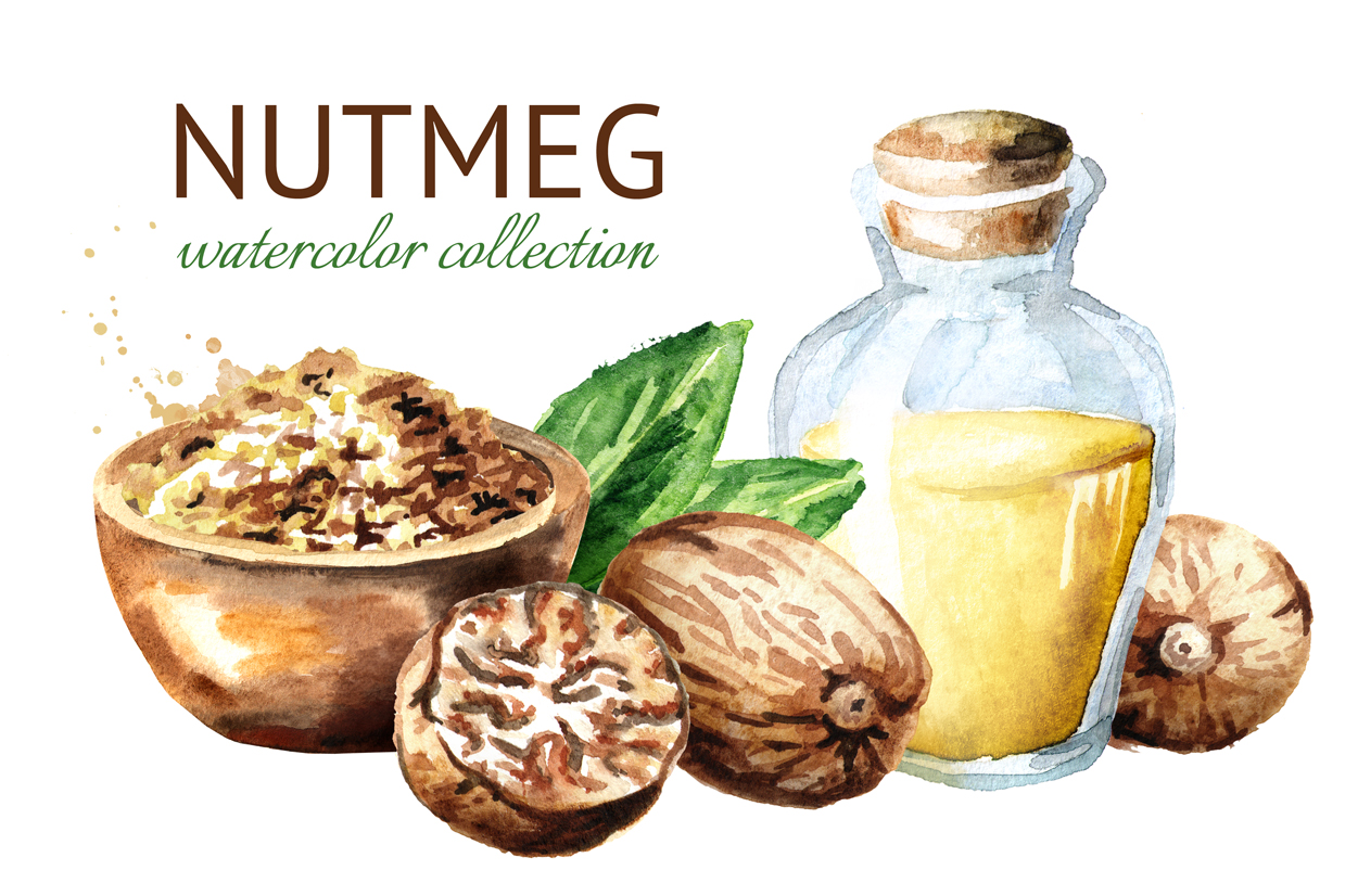 Nutmeg. Watercolor collection example image 1