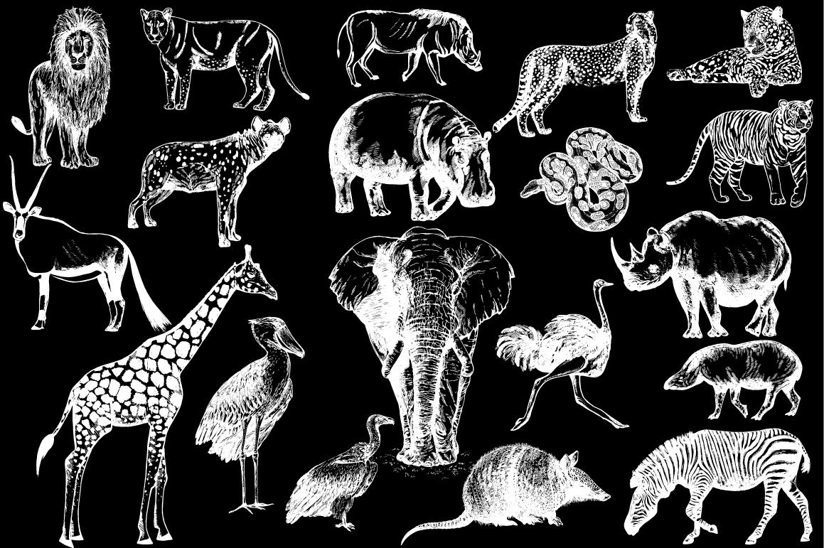 Wild Animals 3 example image 2