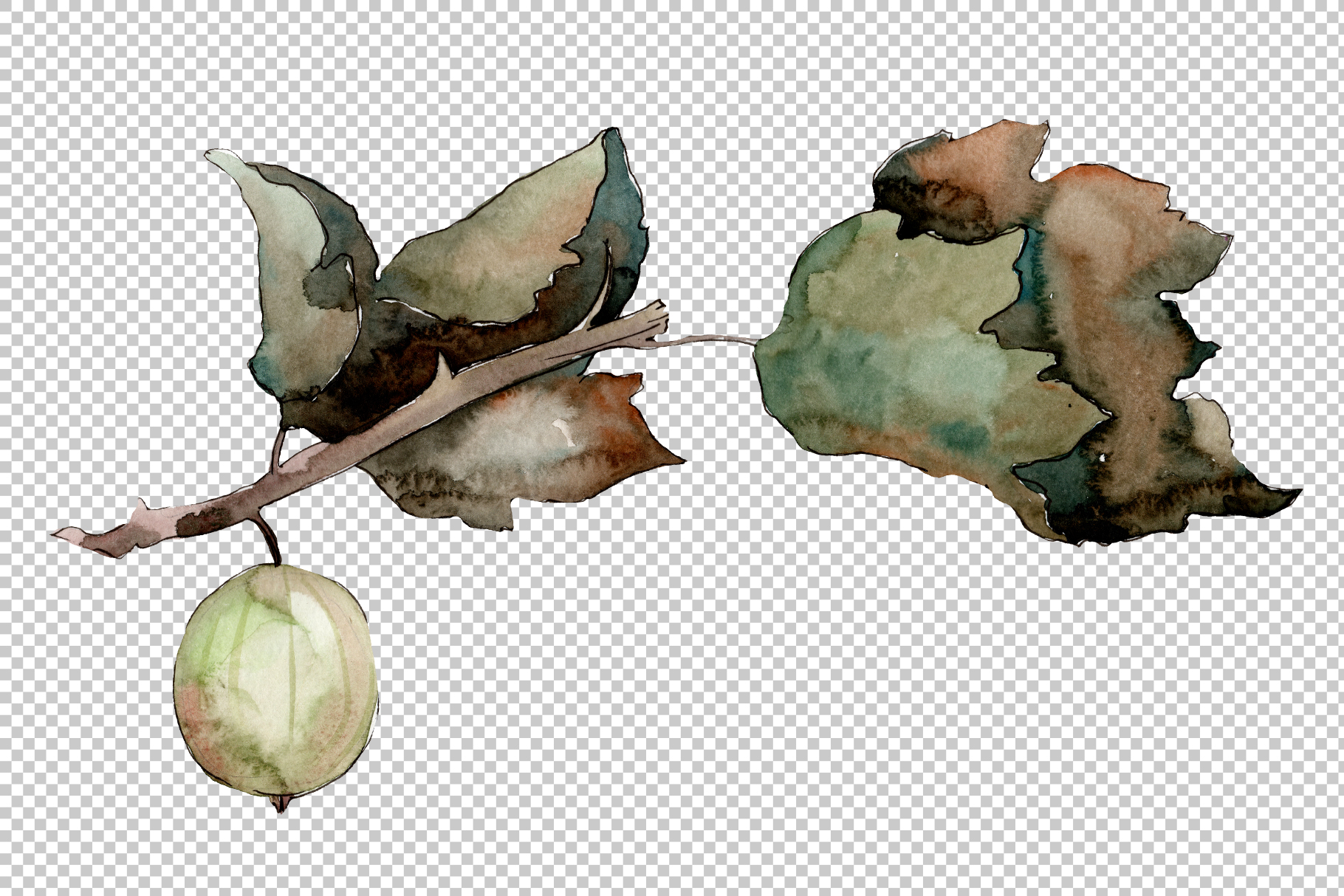 Gooseberry PNG watercolor plant set example image 2