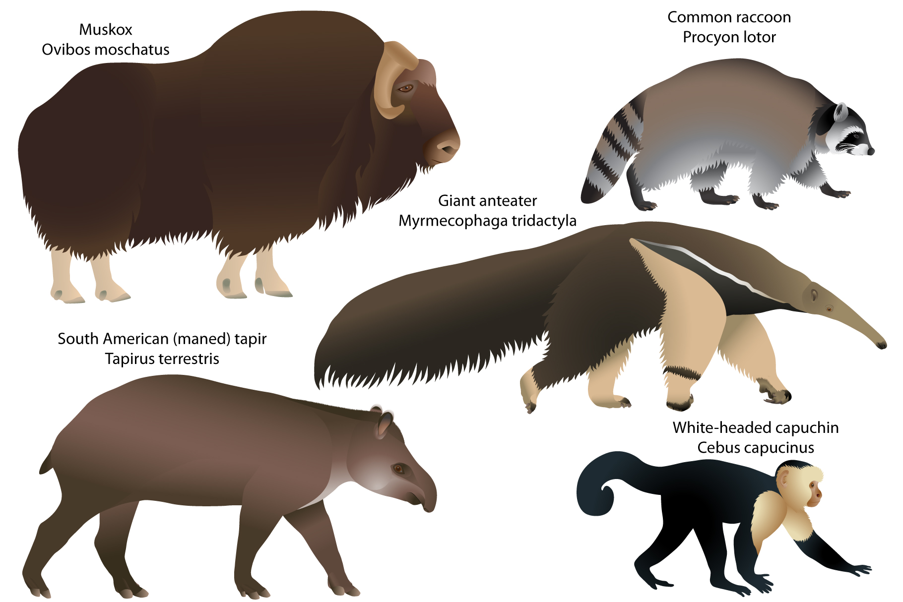 Animals of America example image 1
