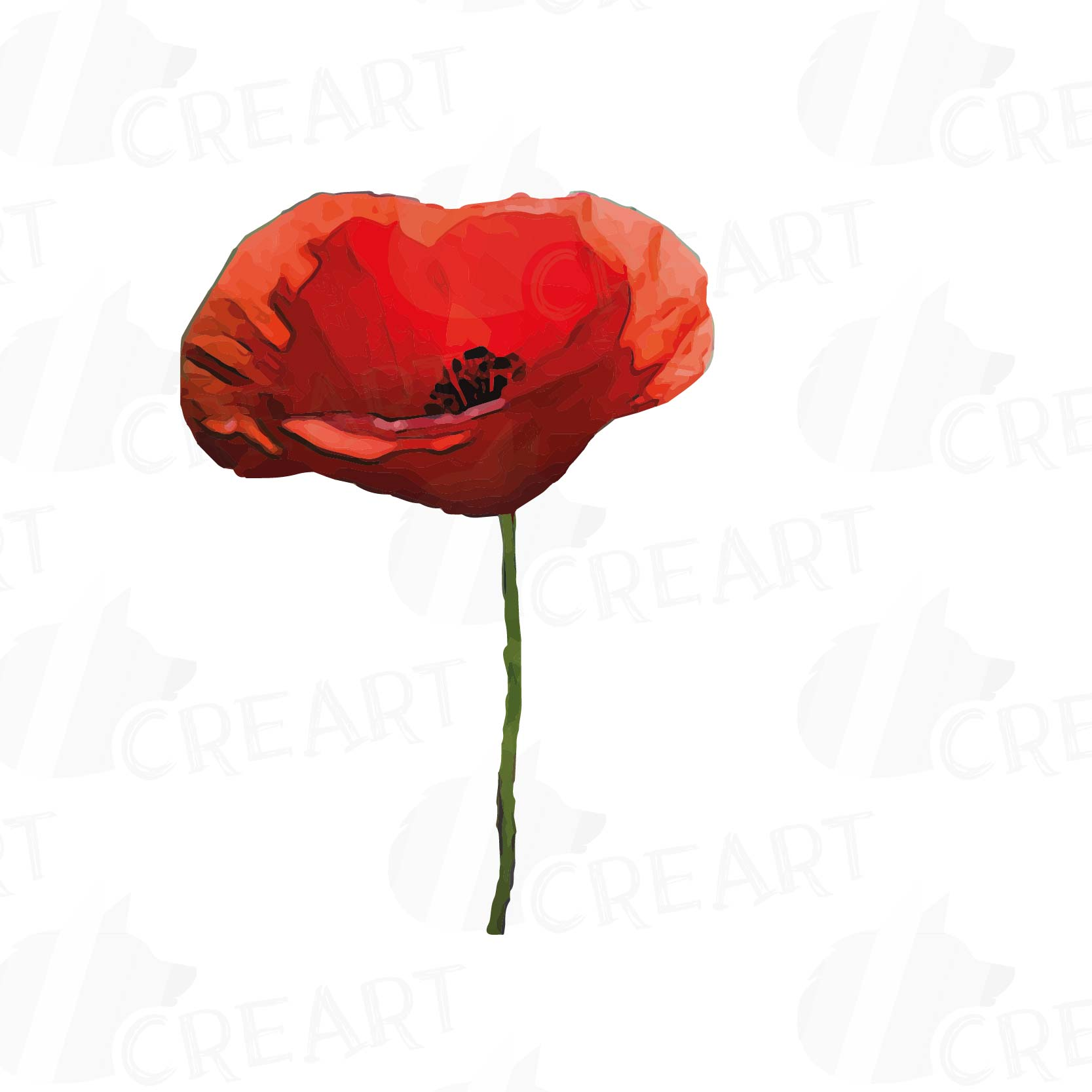 Watercolor Red Poppy Flower And Leaf Clip Art Pack Poppies Png