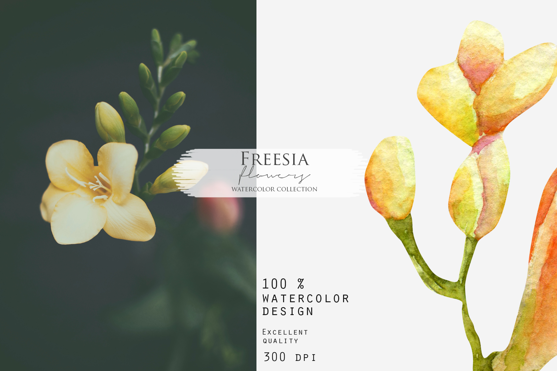 Freesia. Elements & cards example image 5