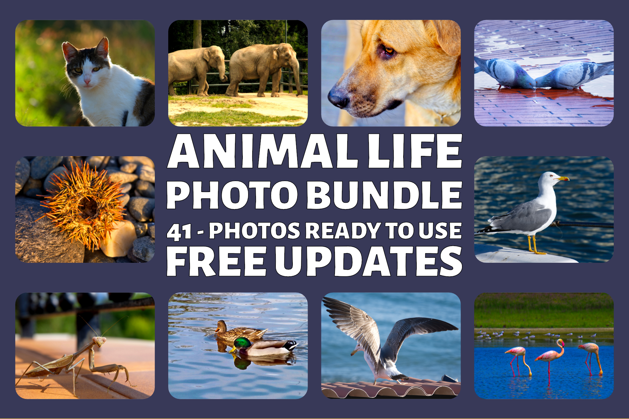 Animal Life Photo Bundle example image 1