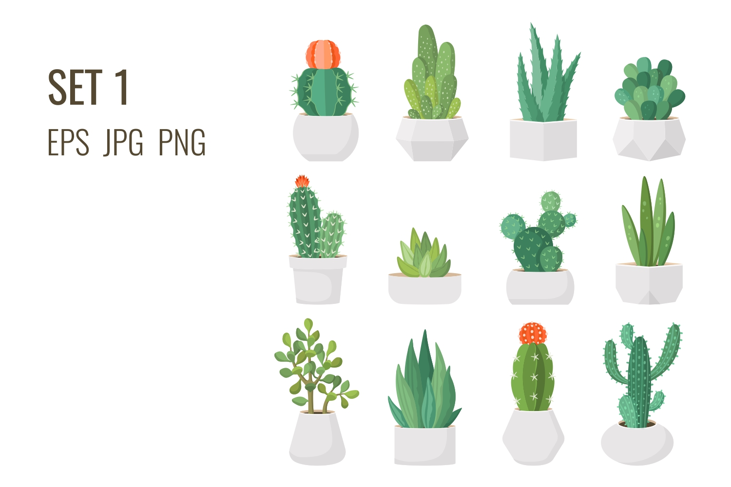 Cacti and succulents in pots example image 2