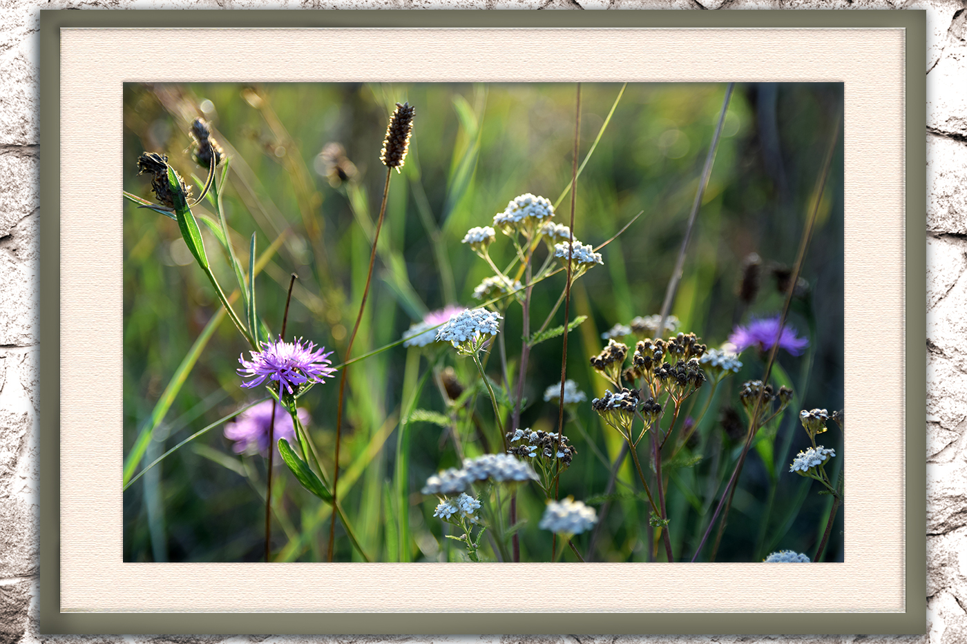 Nature photo, landscape photo, floral photo, summer photo, example image 4