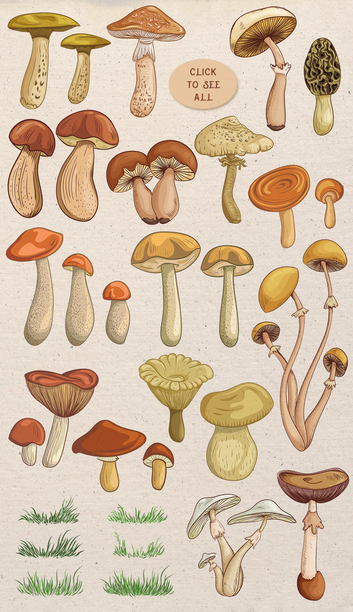 Vintage mushrooms set example image 2