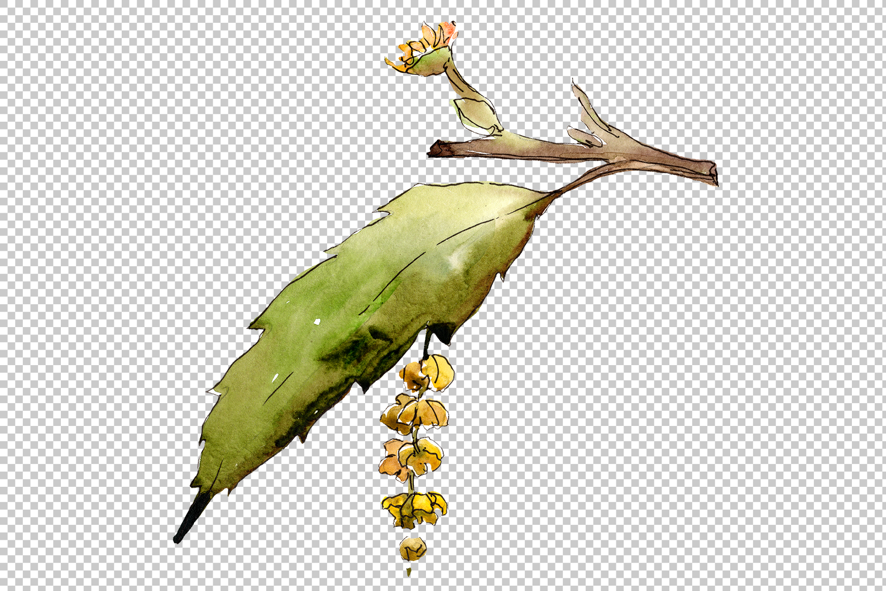 Autumn chestnut PNG watercolor plant set example image 2