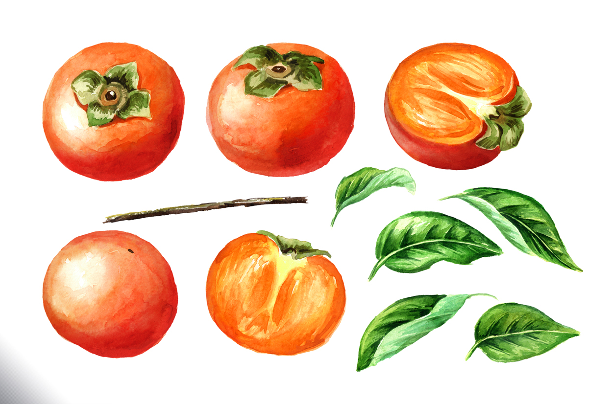 Persimmon. Watercolor set example image 6