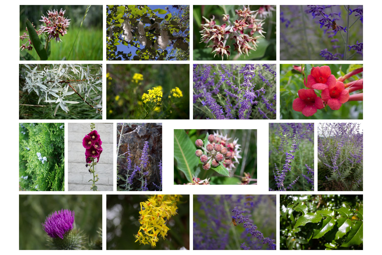 Botanical Photo Bundle, Large Nature Photos example image 11