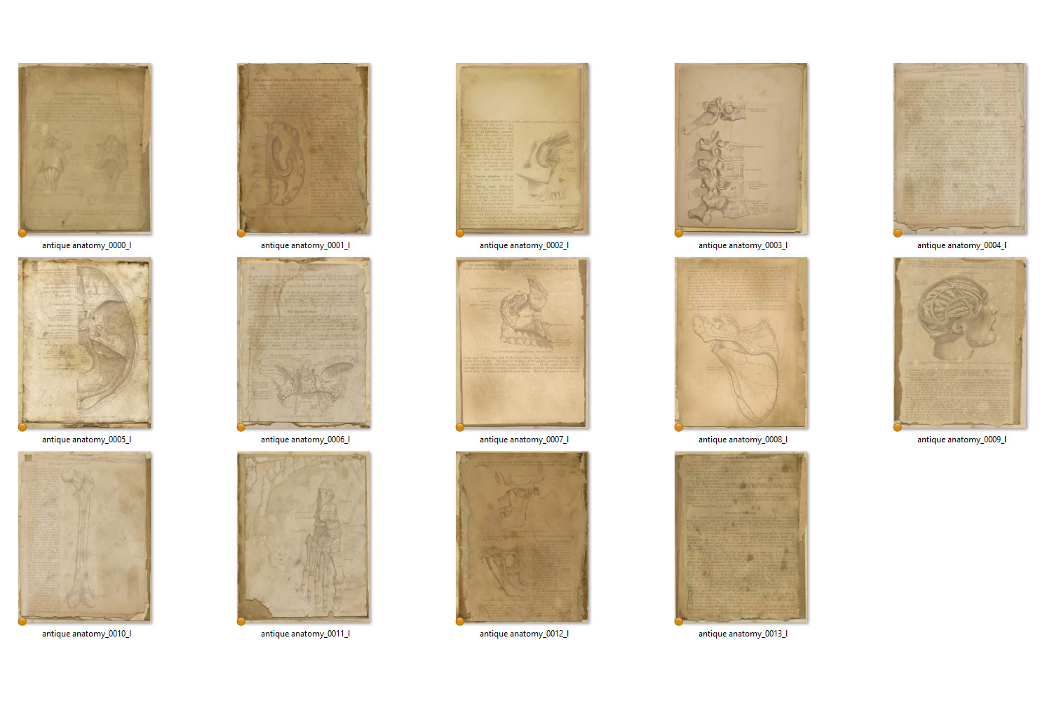 Antique Anatomy Notebook Paper example image 4