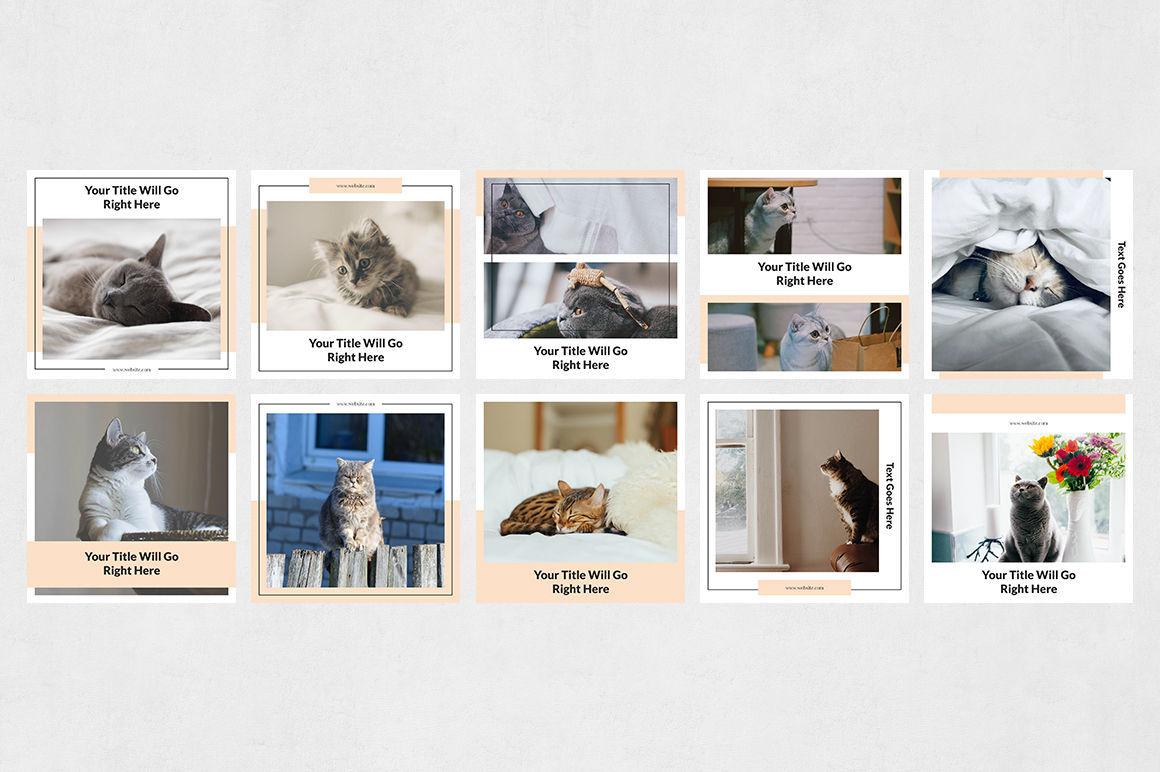 Cats Instagram Posts example image 8