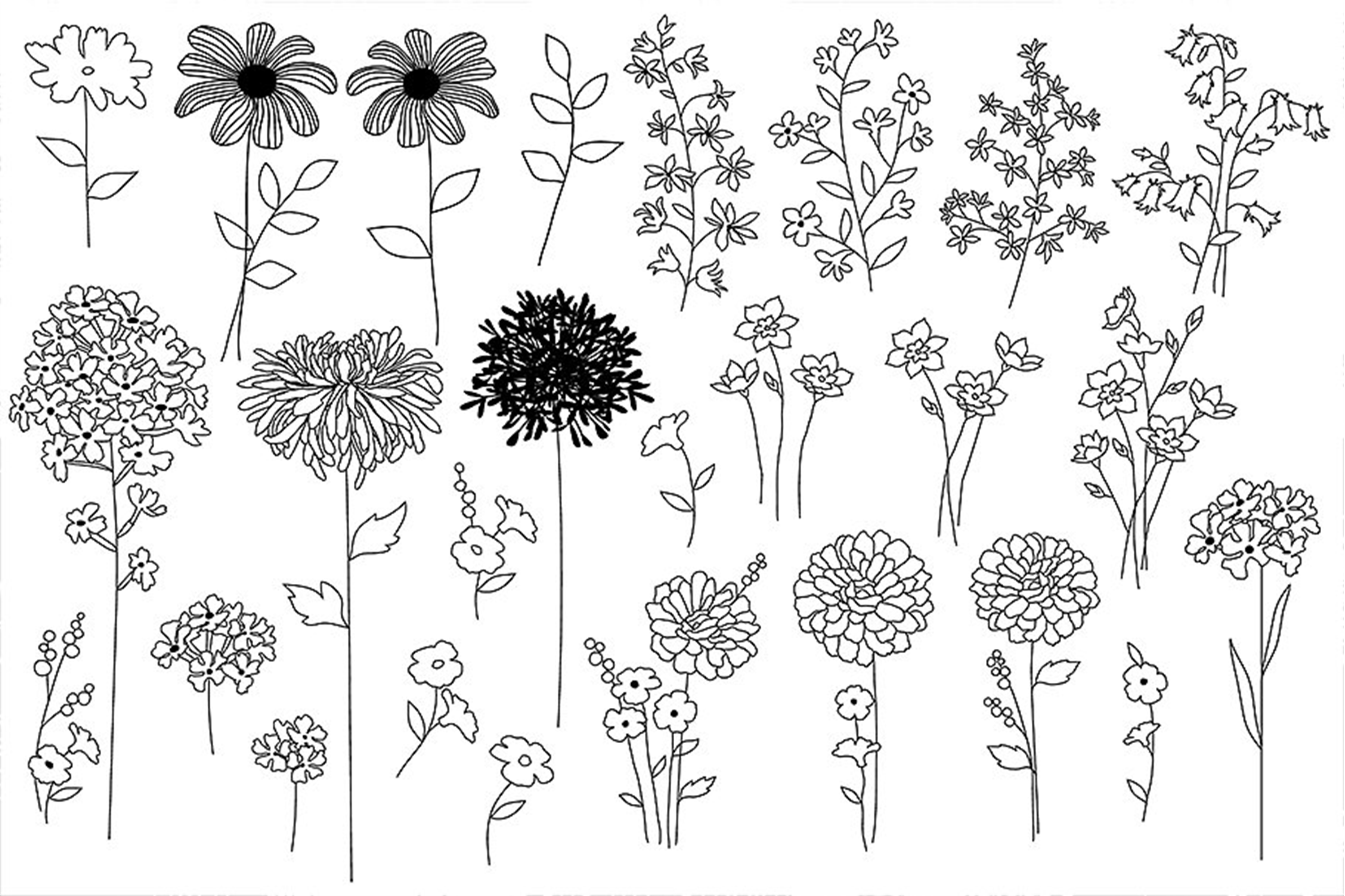 Black & White Botanical Patterns example image 4