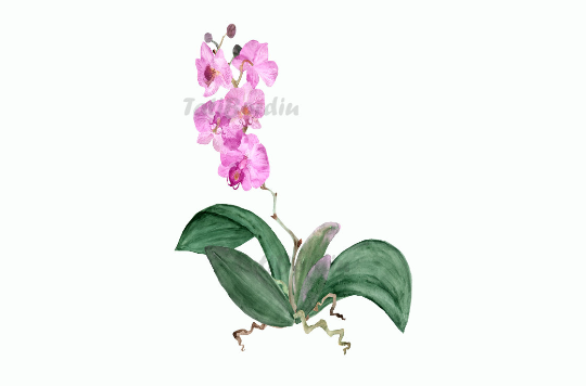 19 Watercolor Orchid Clip Art + Print example image 2