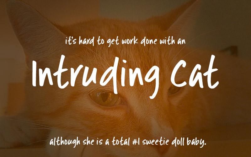 Intruding Cat example 1