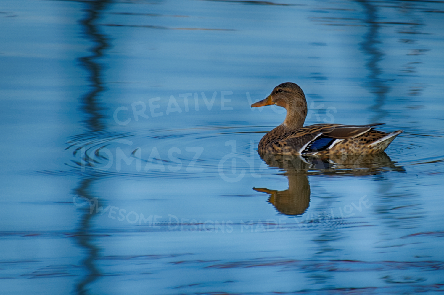 Colorful Duck On The Lake example image 1