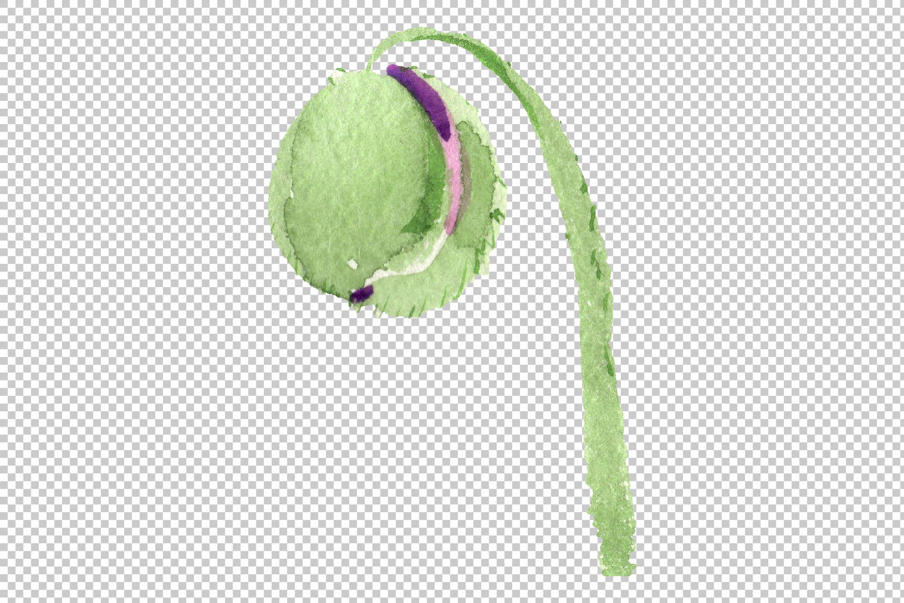 Original poppy Watercolor png example image 2