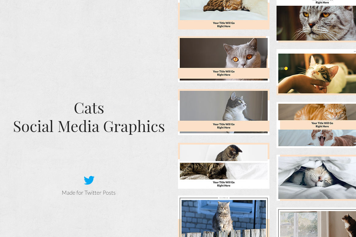 Cats Pack example image 7