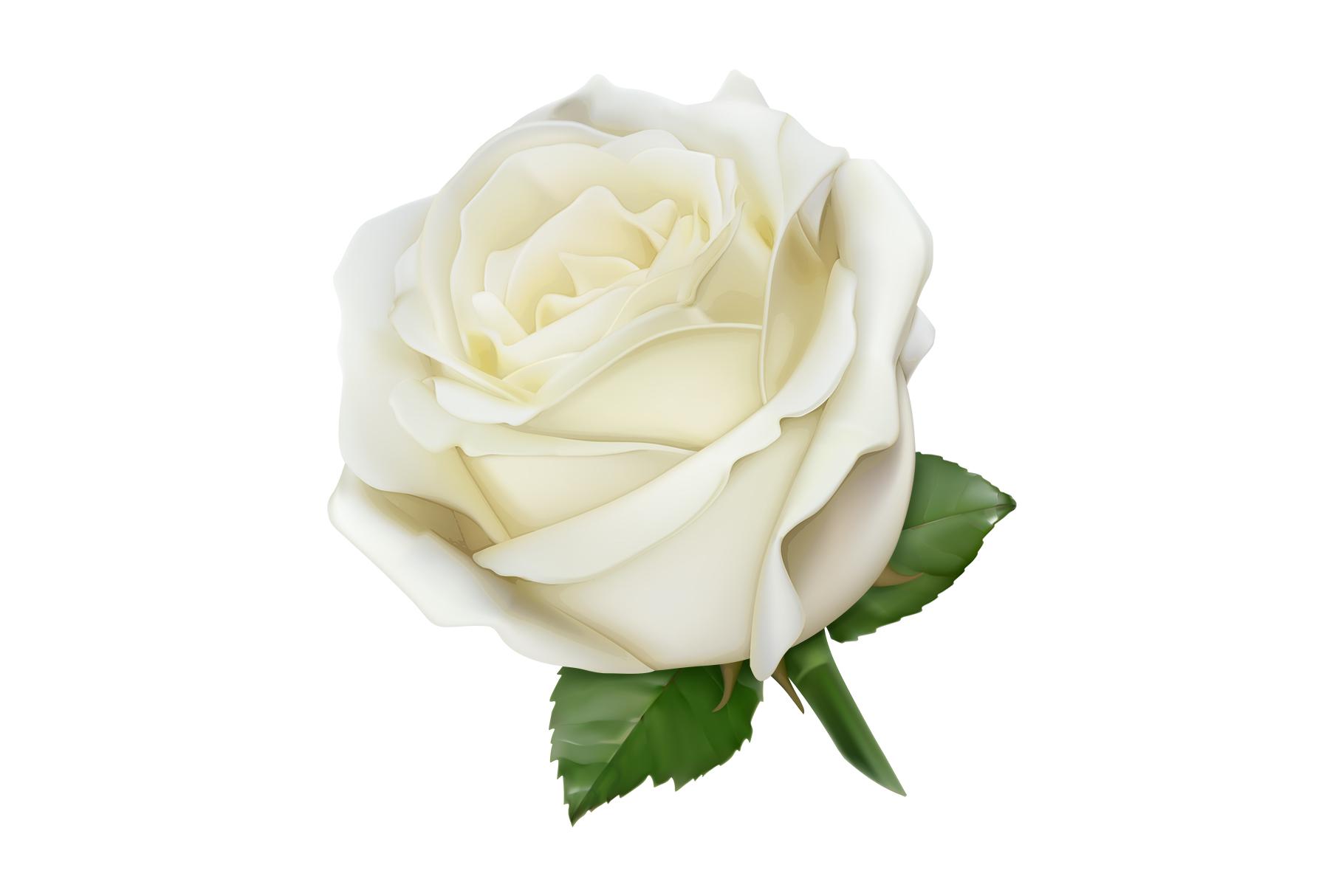 Rose, symbol of love, romantic Valentine's Day, vectors set example image 3